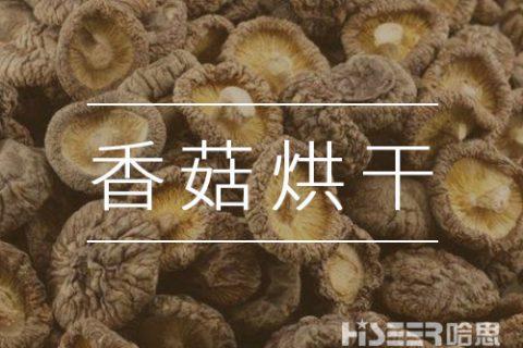 如何用空气能快速高效的烘干蘑菇?