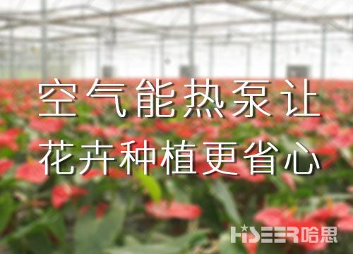空气能热泵让花卉种植更省心,优品率可达90%以上